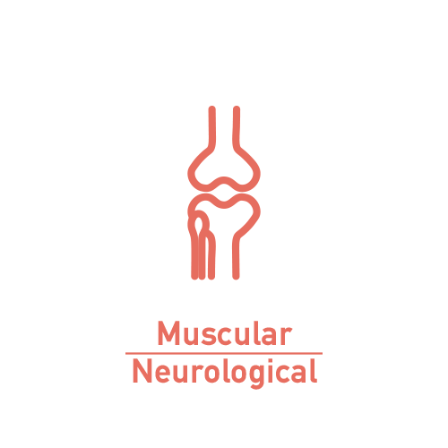 Muscular-Neurological System